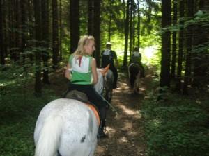 Конные прогулки на юге Подмосковье
