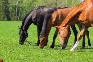 Аренда лошадей Индивидуальные занятия по верховой езде для взрослых