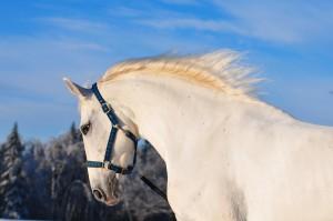 аренда лошадей покататься верхом в подмосковье