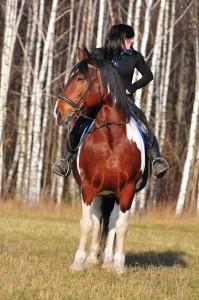 Мерин Гуцул аренда лошадей покататься верхом в подмосковье