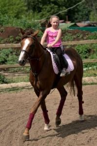 Люберецкий конный двор