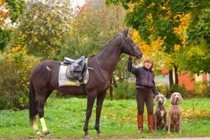 тар-кан аренда лошадей покататься верхом в подмосковье