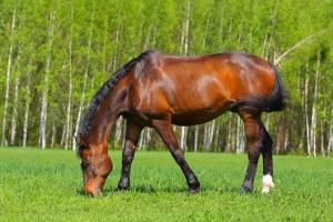 Виват аренда лошадей покататься верхом в подмосковье